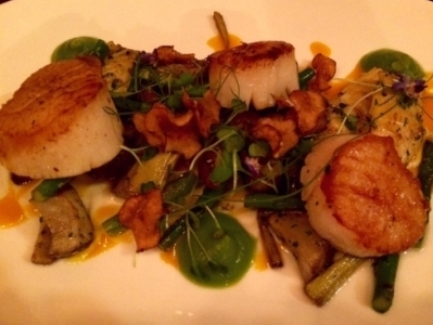 scallops at elevage